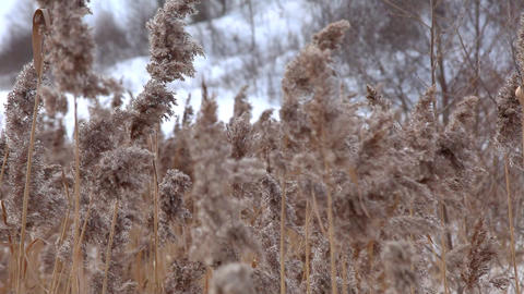 Focus on winter grass Stock Video Footage