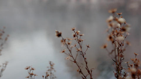 dead plant in morning mist close-up Stock Video Footage