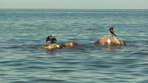 Malawi: cormorants on a rock 5 Stock Video Footage
