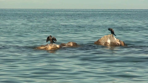 Malawi: cormorants on a rock 5 Stock Video Footage