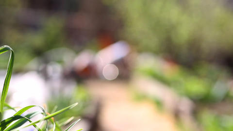 beautiful grass garden close-up Stock Video Footage