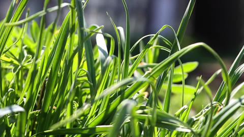 beautiful grass garden close-up Stock Video Footage