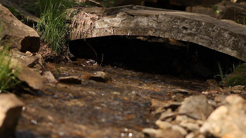 stream in a wood Footage