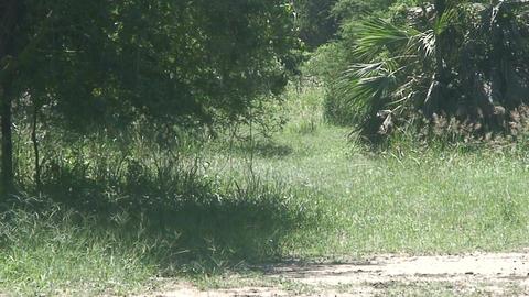 Malawi: impala in a wild 3 Footage