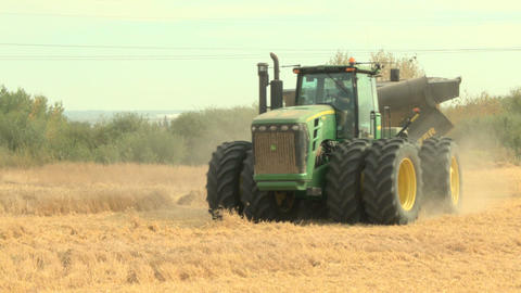 Tractor With Load Of Wheat 021 stock footage