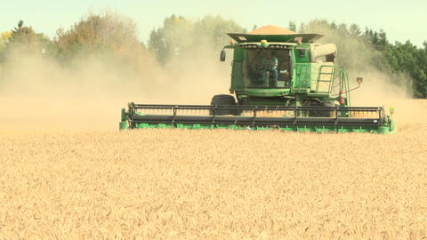 Wheat harvesting with combine 011 Live Action