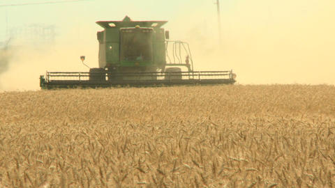 Wheat harvesting with combine 013 Live Action