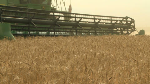 Wheat harvesting with combine 015 Live Action