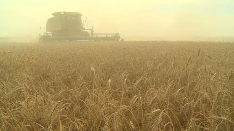 Wheat harvesting with combine 018 Live Action