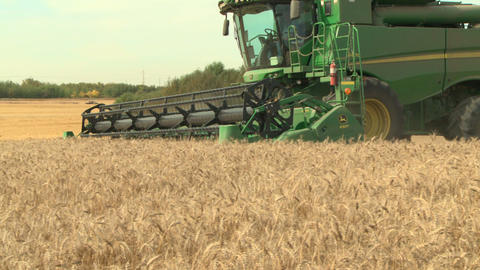 Wheat harvesting with combine 06 Live Action