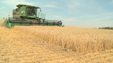 Wheat harvesting with combine 08 Live Action