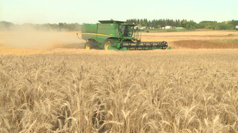 Wheat harvesting with combine tu 09 Live Action