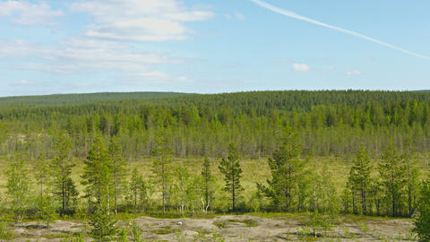 Northern landscape with pines and bogs. Russia Footage