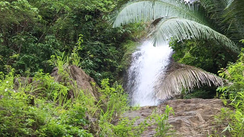 Waterfall in the tropical jungle Footage