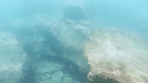 Swimming among the fishes in the ocean Footage