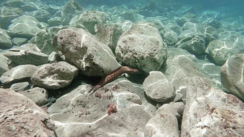 Moray eel swimming amid rocks Footage