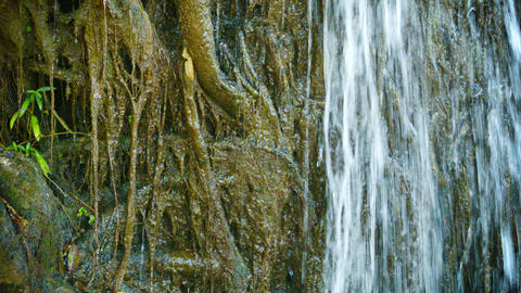 Water pours over the roots. Tropical waterfall clo Footage
