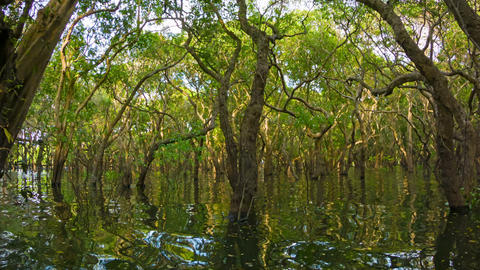 The flooded forest. Cambodia Footage