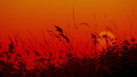Meadow grass against the setting sun. Silhouettes Footage