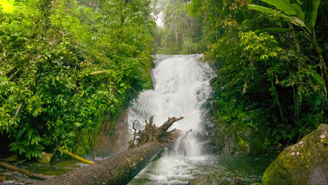 A small waterfall in the rainforest Footage
