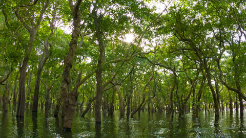 Flooded forest. the view from the boat. Cambodia Footage