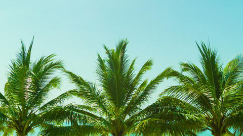 Several tropical palm trees against the sky Footage