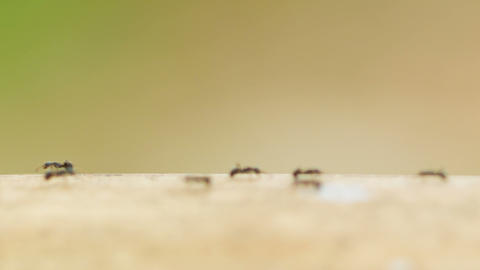 Ants moving on the trunk of bamboo Footage