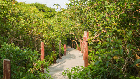 View of the wooden bridge in the bush. Cambodia Footage