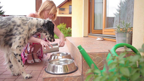 Feeding Dogs stock footage