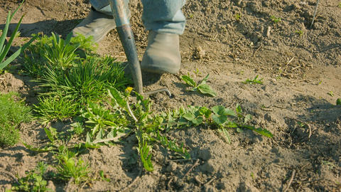 Control of weeds in the garden area Footage
