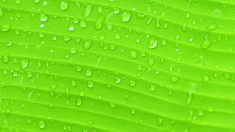 Surface of green banana leaf with drops of water - Footage