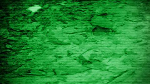 Night pest - rat. Imitation night vision device Live Action