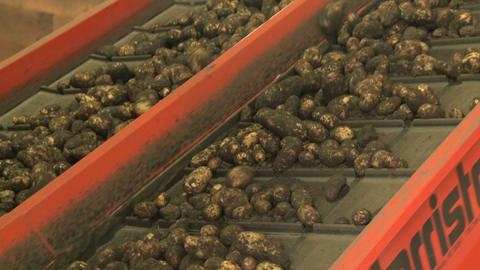 Potato processing 011 Footage