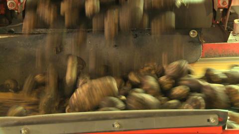 Potatoes on conveyor belt 09 Live Action