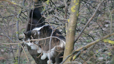 Cats sitting on a tree 3 Stock Video Footage