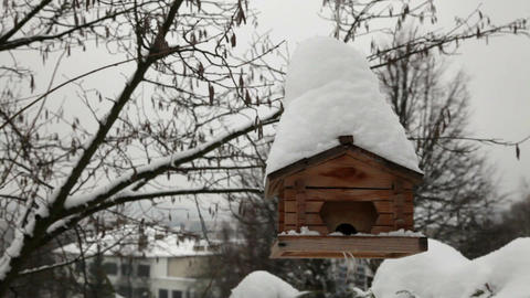 Bird feeding in winter 1 Stock Video Footage