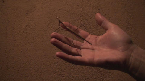 Malawi: praying mantis at sunset in hand Stock Video Footage