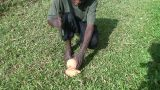 Malawi: African Teen Cuts Coconut 1 stock footage