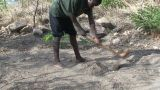 Malawi: African Man Digs A Row In A Ground 1 stock footage