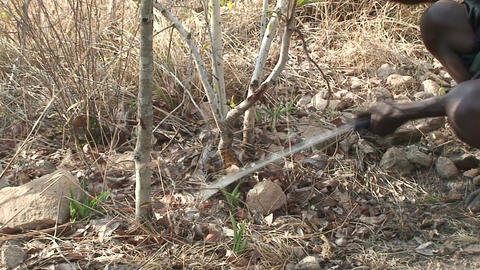 Malawi: african man cuts a tree Footage