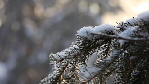 Winter park Stock Video Footage