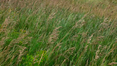 Prairie grass Stock Video Footage
