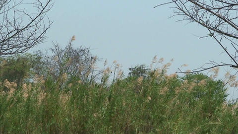 Malawi: grass in a wind Stock Video Footage