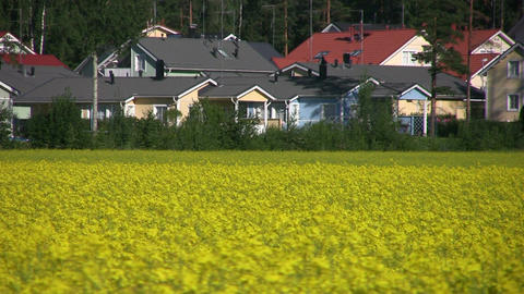 Field of rapeseed near urban area Stock Video Footage