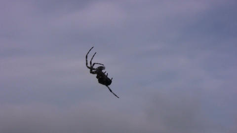 Silhouette of climbing spider on sky background Footage