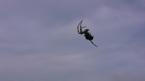 Silhouette of climbing spider on sky background Stock Video Footage