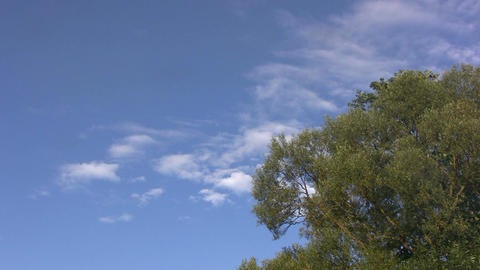 Time-lapse of clouds above the trees Stock Video Footage