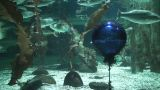 Buoy Catched In Net Underwater, Close-up stock footage