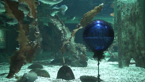 Buoy catched in net underwater, close-up Stock Video Footage