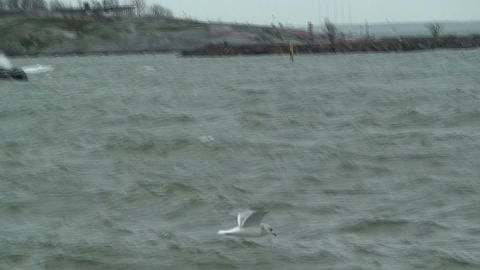 Seagull flying on stormy day Stock Video Footage
